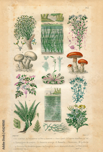 Natural history : plants and flowers
