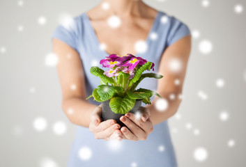 woman's hands holding flower in pot