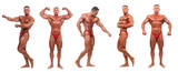 Body builder demonstrating five poses - isolated