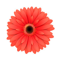 Red daisy flower isolated on white - 3d render