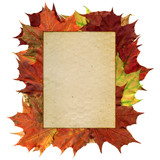 autumn frame 2