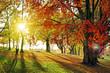 canvas print picture - lichtdurchfluteter Herbstwald