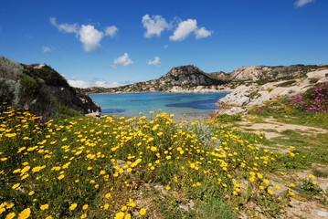 Vegetazione costiera