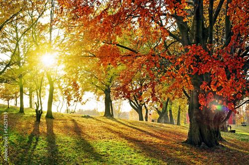 canvas print picture lichtdurchfluteter Herbstwald