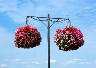 Two hanging baskets of bergonias with blue sky and white clouds