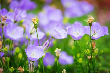 Purple flowers blooming in the garden