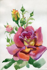 Watercolor Flower Collection: Rose