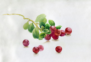Red berry, watercolor illustration
