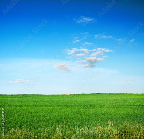 sky and fields