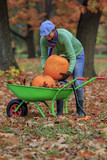 Autumn in the garden - harvest of pumpkins