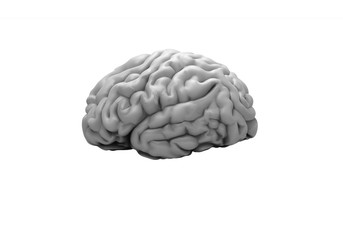 Gray brain on the white background