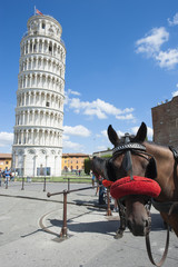 A horse in Pisa, Italy