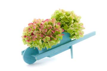 miniature wheelbarrow with hydrangea