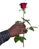 Man holding a rose