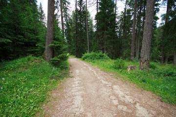 bosco nei pressi del lago di Braies