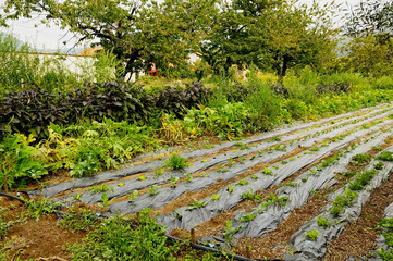 farmland with salad