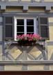 Blumenfenster im Fachwerkhaus