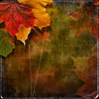 Grungy autumn background with maple leaves