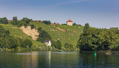 Vineyards along the river Neckar in Stuttgart