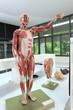 Human full body model