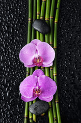 two orchid and bamboo grove,black stone on wet black background