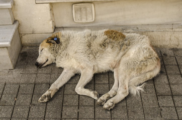 street dog sleeping