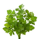 Bunch of fresh parsley isolated on a white background.