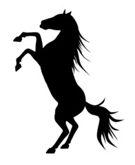 rearing up graceful black silhouette horse, vector against white