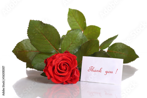 beautiful red rose with gratitude