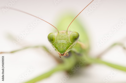 Praying Mantis Close Up Macro Details
