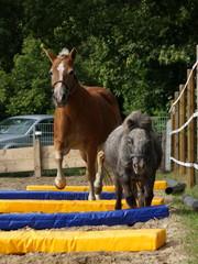 Ponyfreunde