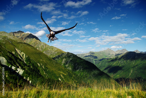 Foto op Plexiglas Eagle eagle flying above the mountains