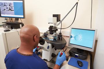Laboratory Fertilization Of Eggs In IVF Treatment