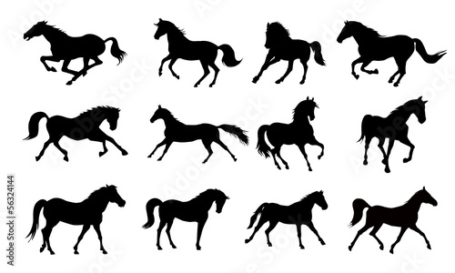 Horse silhouettes - 56324144
