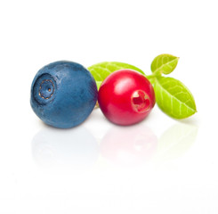 Two wild berry - cowberry and blueberry isolated on white