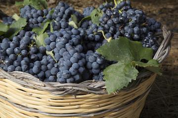 Close-up di un cesto di vimini con uva nera