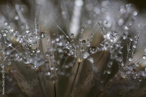 Staande foto Paardebloemen en water Cristal