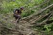 Woman jungle trekking
