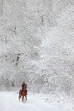 Equestrian woman in winter woods