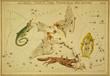 Astronomical chart,vintage
