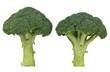 frisches Brokkoli Gemüse