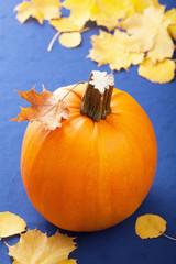pumpkin on blue background