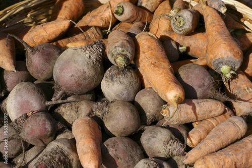 Свекла и морковь.Осенний урожай