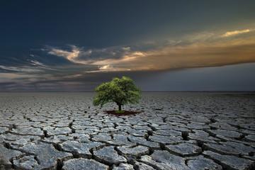 desert tree green