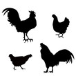 Chicken, Roster Silhouettes - Illustration