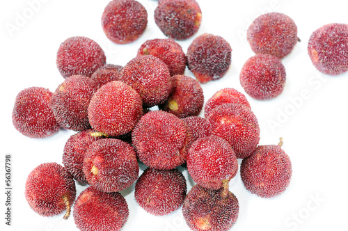 Red bayberry fruits