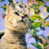 Cute cat on the tree with retro filter effect