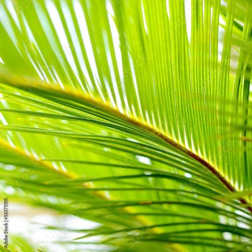 zblizenie-lisci-palmowych