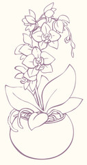 Vector outline drawing. Flowering branch of orchid in a vase