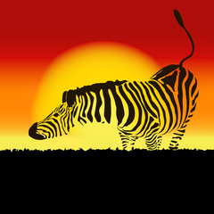 Illustration of zebra silhouette at sunset, vector